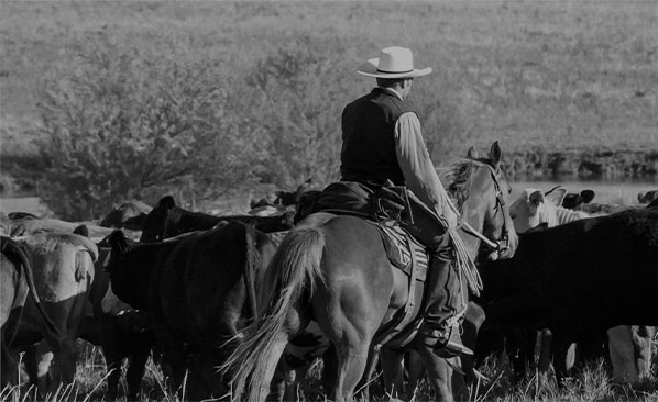 A rancher riding a horse with a herd of cattle